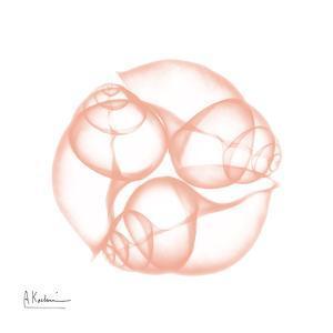 Peach Snail Shell by Albert Koetsier