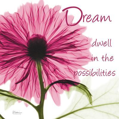 Pink Chrysanthemum Dream 2