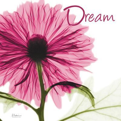 Pink Chrysanthemum Dream by Albert Koetsier