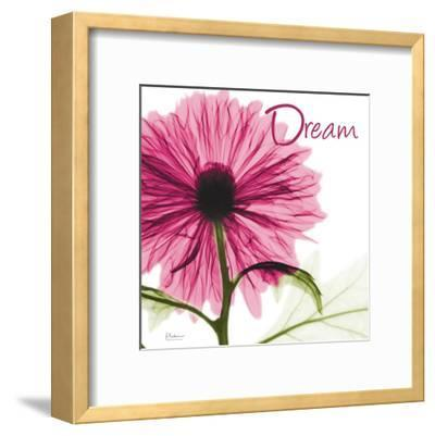 Pink Chrysanthemum Dream