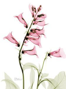 Pink Foxglove Portrait by Albert Koetsier