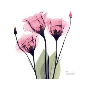 Pink Gentian by Albert Koetsier