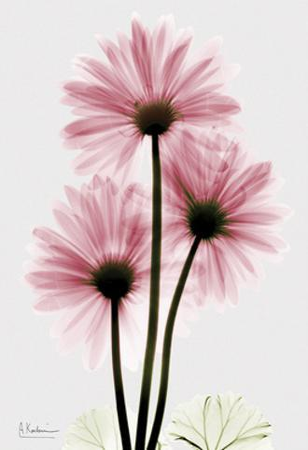 Pink Gerbera Triple