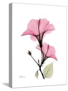 Pink Hibiscus by Albert Koetsier