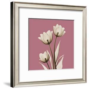 Pink Luster Tulips by Albert Koetsier