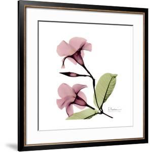 Pink Mandelila by Albert Koetsier