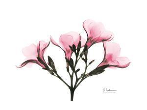 Pink Oleander Peace by Albert Koetsier