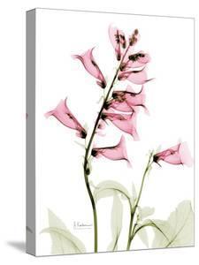 Pink Spring Foxglove by Albert Koetsier