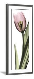 Pink Tulip Part 1 by Albert Koetsier
