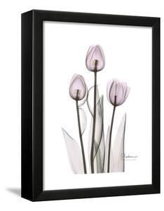 Pink Tulip Portrait by Albert Koetsier