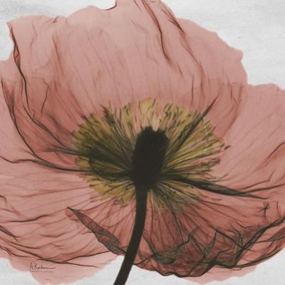 Poppy Marsala by Albert Koetsier