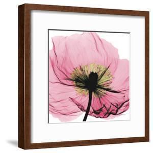Poppy Pink by Albert Koetsier