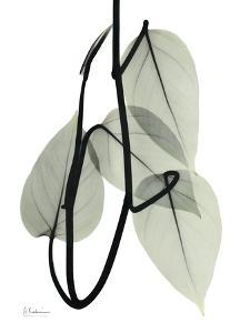 Pot Hos Leaf Portrait by Albert Koetsier