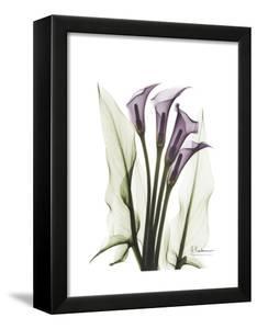 Purple Calla Lily Portrait by Albert Koetsier
