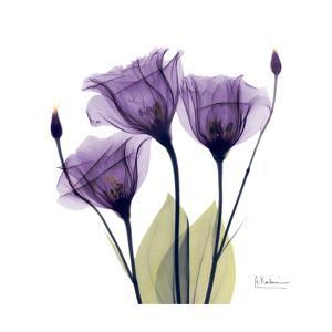 Purple Gentian Portrait by Albert Koetsier