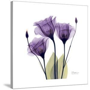 Purple Gentian Portrait by Albert Koetsier