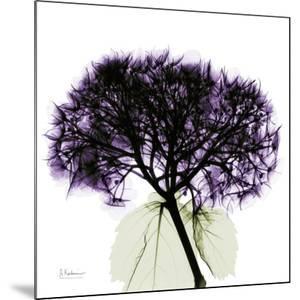 Purple Hydrangea Close Up by Albert Koetsier