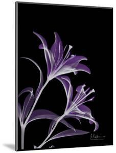 Purple Lily by Albert Koetsier