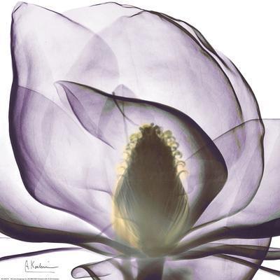 Purple Magnolia by Albert Koetsier