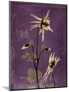 Purple Opus Columbine by Albert Koetsier
