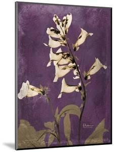 Purple Opus Foxglove by Albert Koetsier