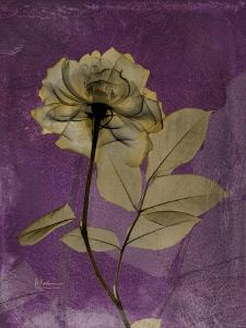 Purple Opus Rose by Albert Koetsier