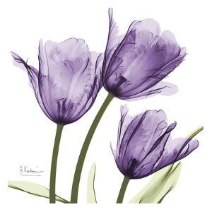 Purple Trio Tulips C54 by Albert Koetsier