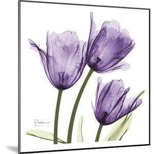 Purple Trio Tulips C54 by Albert Koetsier