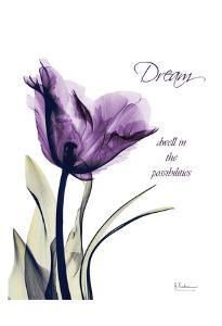Purple Tulip, Dream by Albert Koetsier