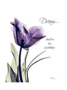 Purple Tulip Dream by Albert Koetsier