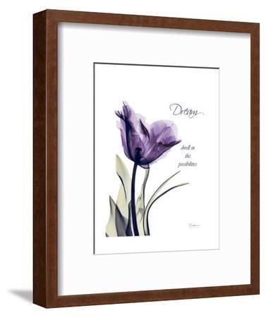 Purple Tulip, Dream