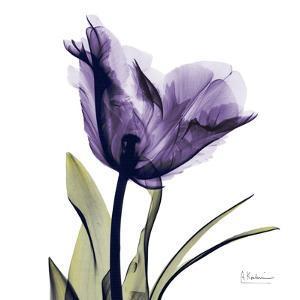 Purple Tulip Portrait by Albert Koetsier