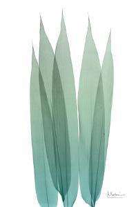 Radiant Bamboo Leaf 1 by Albert Koetsier