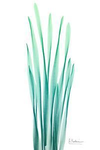 Radiant Bamboo Leaf by Albert Koetsier