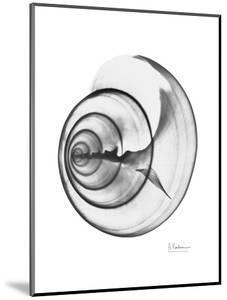 Ramshorn Shell Gray by Albert Koetsier