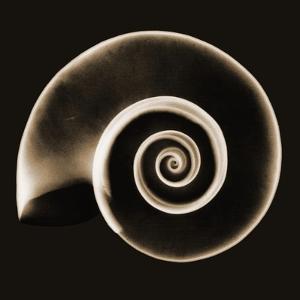 Ramshorn Snail Shell Sepia by Albert Koetsier