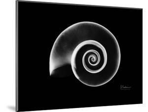 Ramshorn Snail Shell Xray by Albert Koetsier