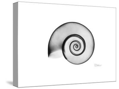 Ramshorn Snail Shell
