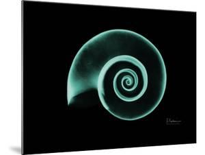 Ramshorn Snail Shell by Albert Koetsier