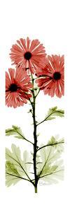 Red Chrysanthemum Trio by Albert Koetsier