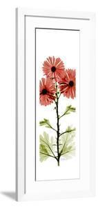 Red Chrysanthemums by Albert Koetsier