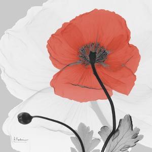 Red Moment Poppy 2 by Albert Koetsier