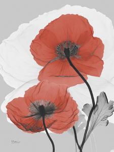 Red Moment Poppy by Albert Koetsier