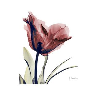 Red Tulip by Albert Koetsier