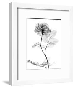 Rose Gray A by Albert Koetsier