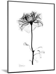 Rose Gray by Albert Koetsier