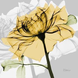 Rose in Gold 5 by Albert Koetsier