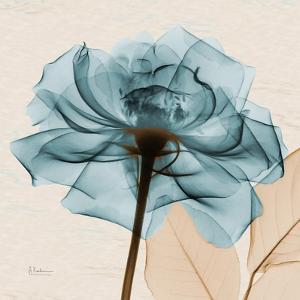 Rose of Mine 1 by Albert Koetsier