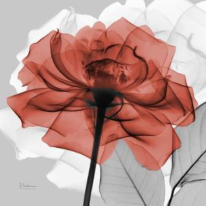 Rose on Gray 1 by Albert Koetsier