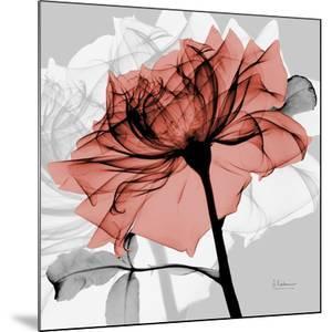Rose on Gray 2 by Albert Koetsier